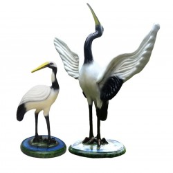Attractive White Siberian Crane Bird Pair