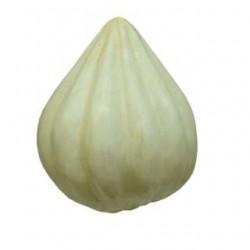 A Learning Half Cutted Model- Garlic